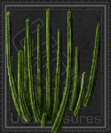 An ultima online Pipe Cactus